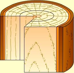 木材3个切面图