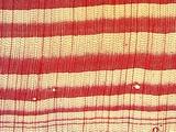 落叶树横切面显微构造特征图